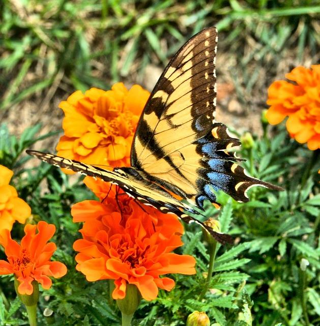 butterfly-54448_640